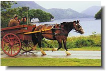 Killarney jaunting cart